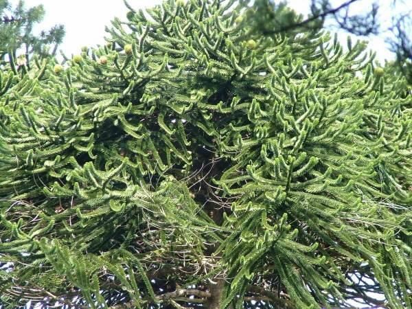 tree limbs at ashford castle in ireland