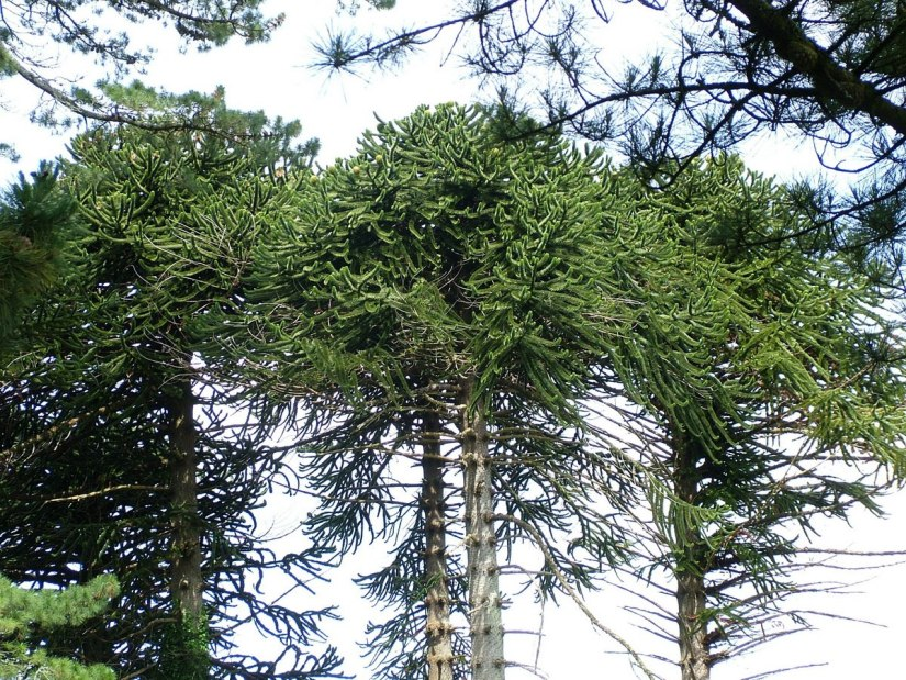 tree tops at ashford castle - ireland