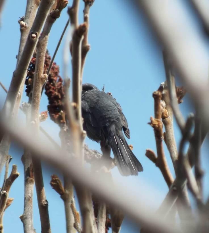 catbird tail - ashbridges bay park - toronto