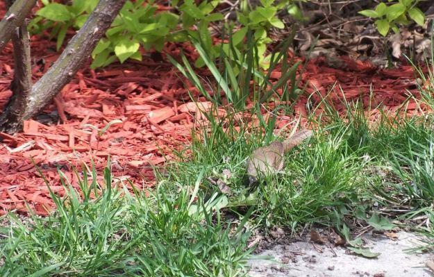 house wren among long grass - toronto