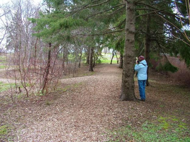 rosetta mcclain gardens_toronto