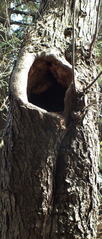 tree along lake ontario - toronto