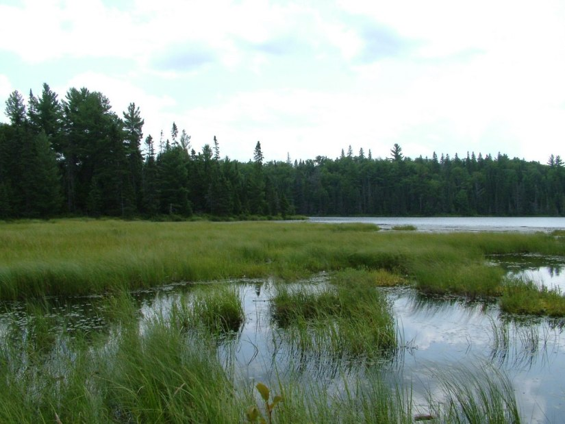 marsh on march hare lake - algonquin park - ontario 2