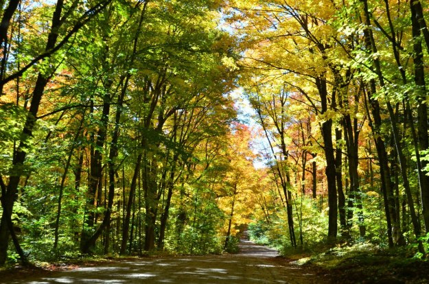 fall colors in algonquin park - fall 2014 - pic 15