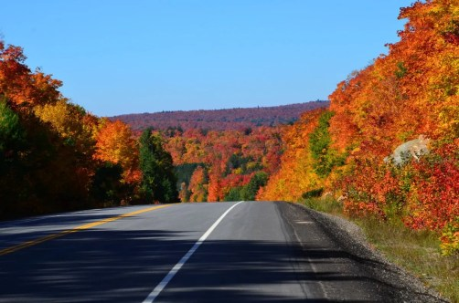 fall colors in algonquin park