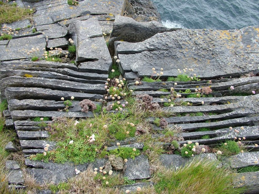 An image of Thrift growing among rocks on Inishmore Island in Ireland. Photography by Frame To Frame - Bob and Jean.