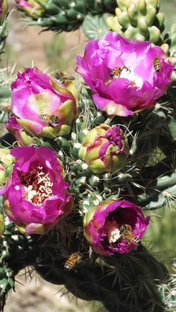 Cactaceae cactus, mesa verde national park, 5