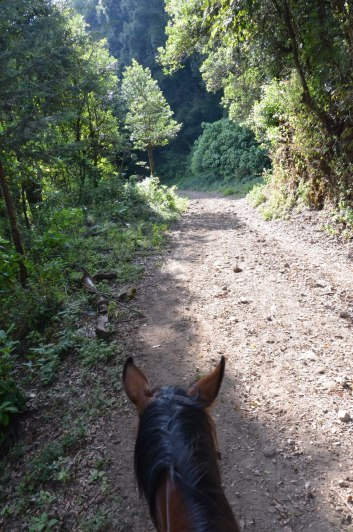 Horse trail to Cerro Pelon Monarch Butterfly Sanctuary, near Macheros, Mexico