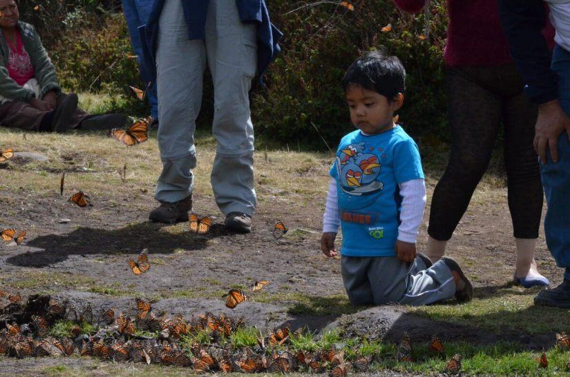 monarch butterflies along creek at el rosario biosphere reserve, mexico 7