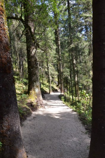 Hiking trail through forest at Sierra Chincua Butterfly Sanctuary near Angangueo, Mexico
