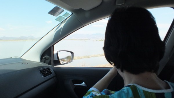 Jean takes photos from car of birds on Lago de Cuitzeo, in the Michoacán State, Mexico