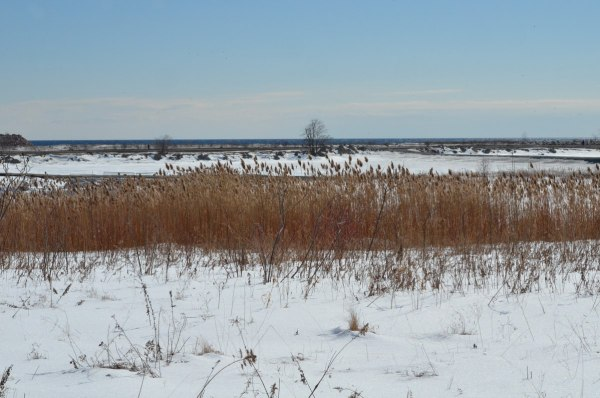 winter at tommy thompson park, toronto, ontario, 3