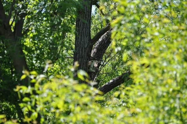 nest basket, second marsh, oshawa, ontario, pic 2
