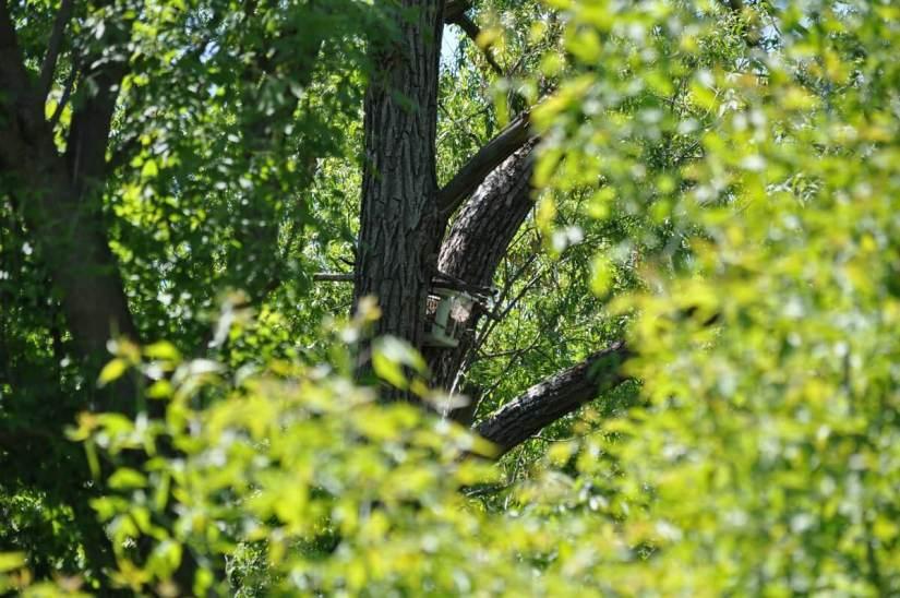 nest basket, second marsh, oshawa, ontario