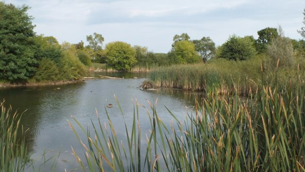 Wetlands at Colonel Samuel Smith Park in Etobicoke, Ontario, Canada