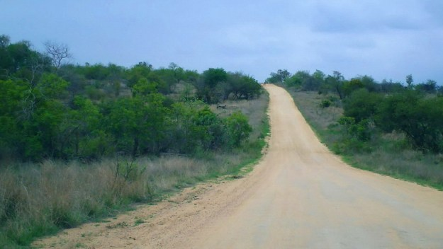 An image of a dirt road through the savannah in Kruger National Park in South Africa.