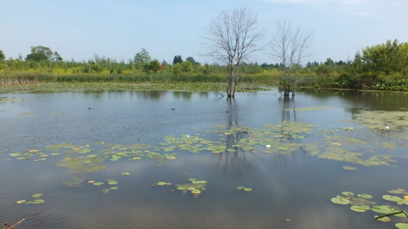 South Reesor Pond in northeast Toronto, Ontario, Canada