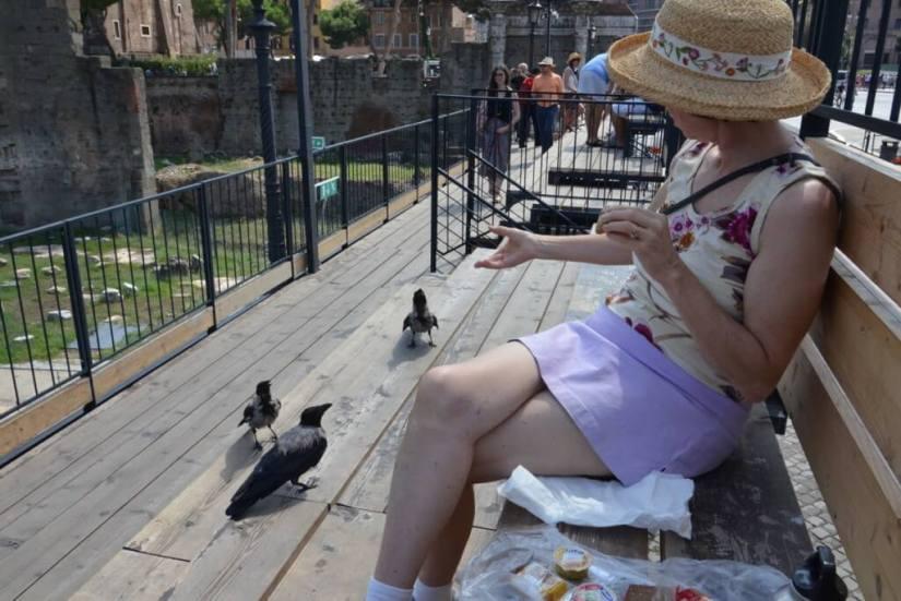 Jean feeding hooded crows at Trajan's Market, in Rome, Italy