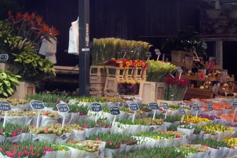 An image of various flowers like tulips for sale at a market in Amsterdam the Netherlands. Photography by Frame To Frame - Bob and Jean.