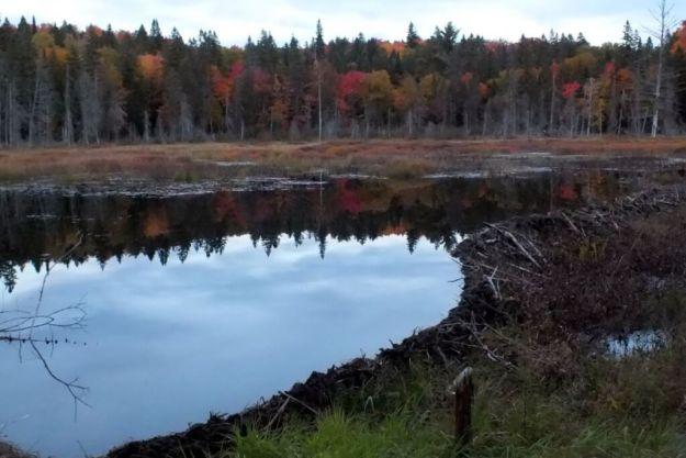 swamplands, ontario