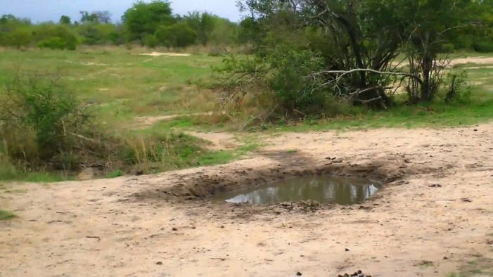 armed safari, kruger national park, south africa, pic 18