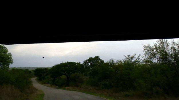 early morning drive, kruger national park, south africa, pic 3