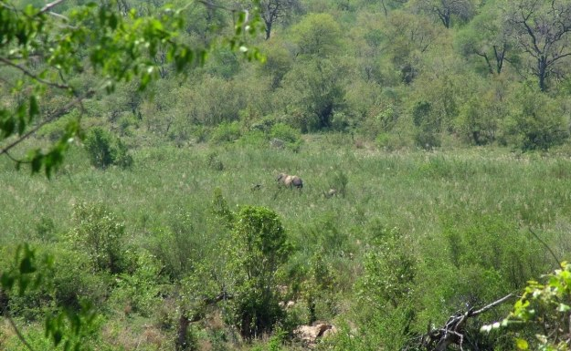 elephants, kruger national park, south africa, pic 6