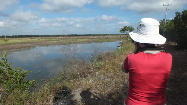 Jean takes a photo at shrimp ponds in San Blas