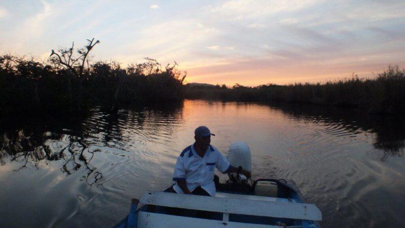 mangrove swamp, san blas, nayarit, mexico, pic 12