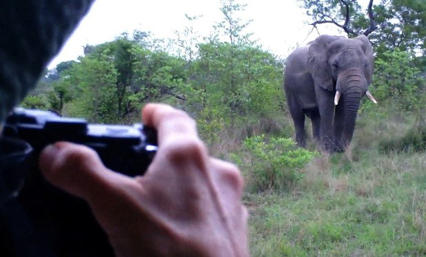 An image of Jean photographing an African Bush Elephant in Kruger National Park, South Africa.  Photography by Frame To Frame - Bob and Jean.