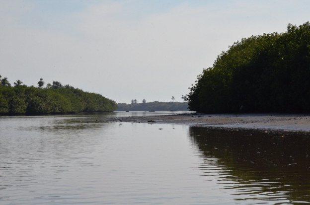 Photo of the shoreline along the San Cristobal River near San Blas, Mexico