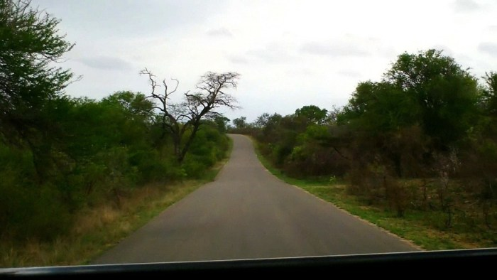 roadway, kruger national park, south africa, pic 2
