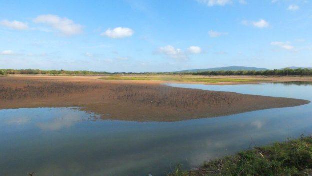 An image of the shrimp ponds near San Blas, Mexico.