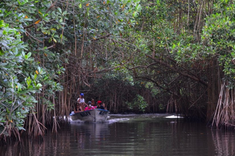 Photo of a tourist boat in the mangrove swamp near San Blas, Mexico