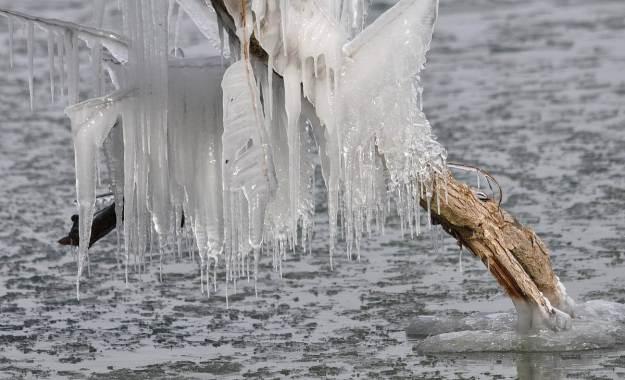 ice coated shoreline and trees, lake ontario, ontario, canada, 10