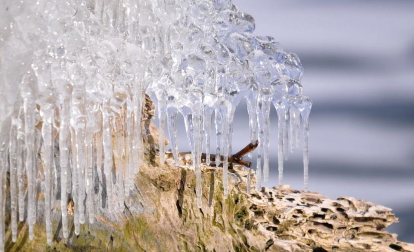 ice coated shoreline and trees, lake ontario, ontario, canada, 14