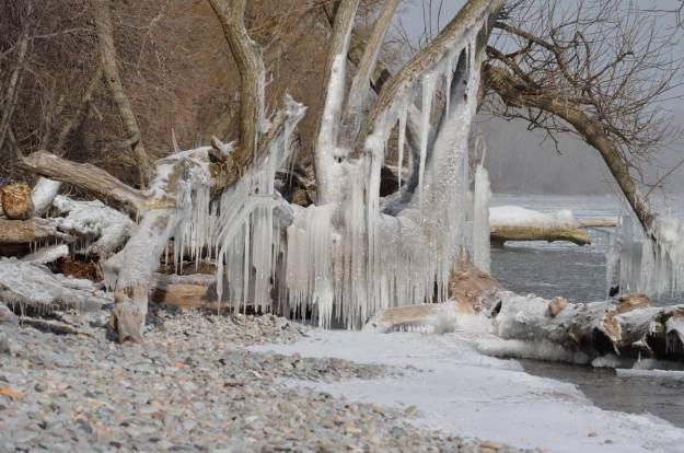 ice coated shoreline and trees, lake ontario, ontario, canada, 2