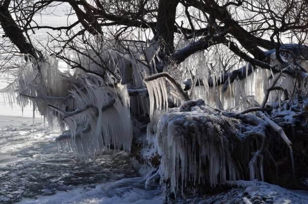 ice coated shoreline and trees, lake ontario, ontario, canada, 37