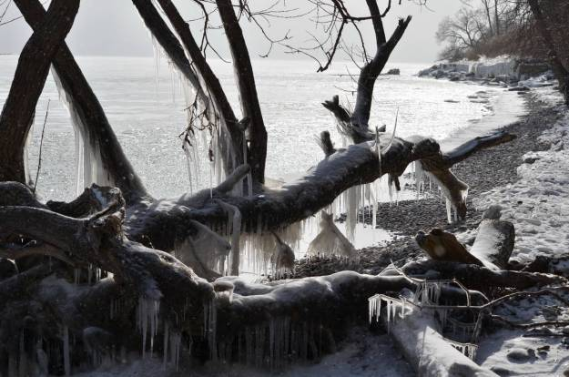 ice coated shoreline and trees, lake ontario, ontario, canada, 5