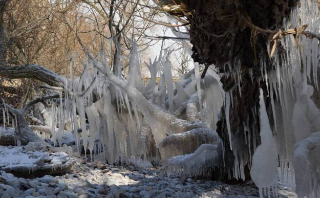 ice coated shoreline and trees, lake ontario, ontario, canada, 9