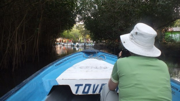 jean in a boat in the mangrove swamp, san blas, mexico