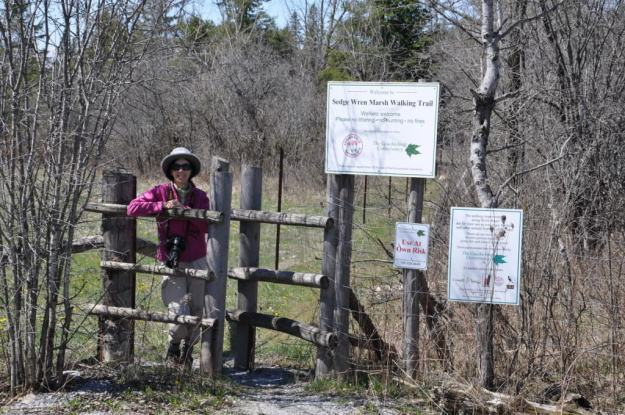 jean on the sedge wren walking trail, carden alvar, ontario