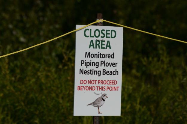 piping plover closed area sign at darlington provincial park, ontario