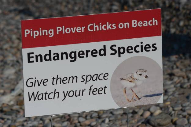 Piping plover endangered species sign at Darlington Provincial Park, Ontario