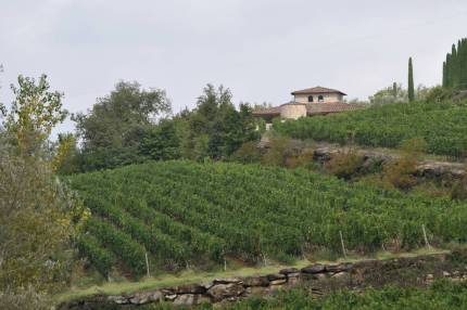 winery at Il Colombaio di Cencio, Gaiole, Chianti, Tuscany, Italy