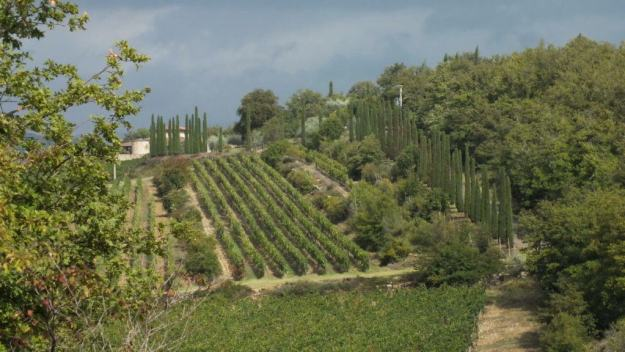 Image of the Vineyards at Il Colombaio di Cencio, Gaiole, Chianti, Tuscany, Italy
