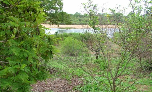 sabie-river-viewed-from-inside-lower-sabie-rest-camp-sign-at-kruger-national-park-south-africa