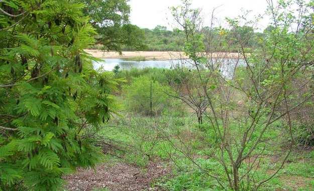 sabie-river-viewed-from-inside-lower-sabie-rest-camp-sign-at-kruger-national-park-south-africa