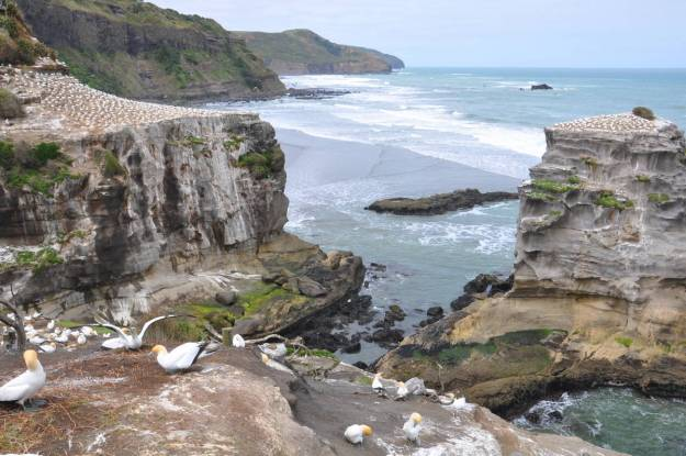 coastline-at-the-muriwai-gannet-colony-waitakere-new-zealand-pic-2