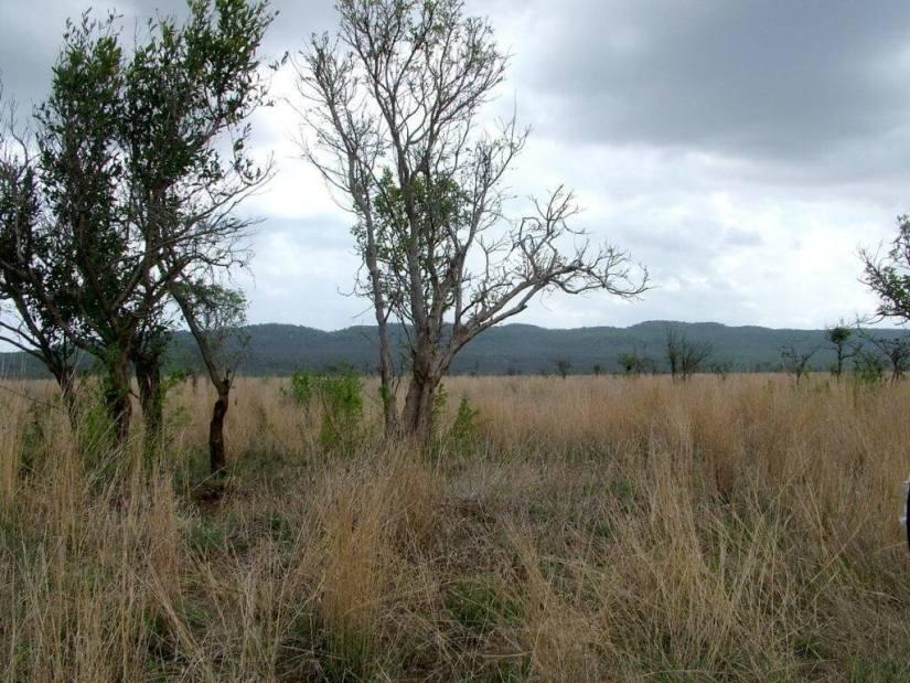 grasslands-in-kruger-national-park-south-africa